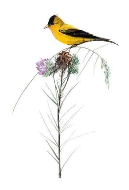 pbuckleymoss-artist-proof-bird