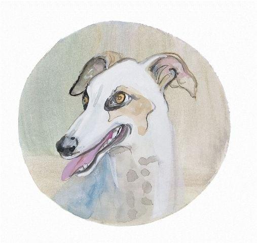 pbuckleymoss-print-limitededition-dog-greyhound