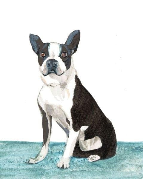 Boston Terrier Dog Limited Edition Print by P Buckley Moss features a black and white dog with some gardk gray markings on a base of aqua and white background.