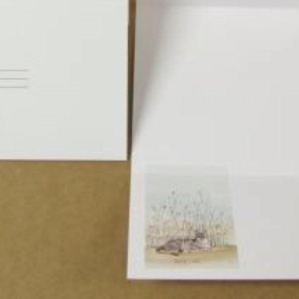 pbuckleymoss-notecard-cat