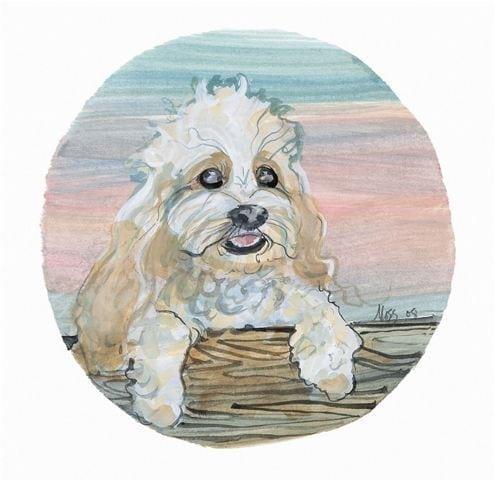 pbuckleymoss-prints-limitededition-cockapoo-dog-art