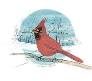 Bird-cardinal-limitededition-print-pbuckleymoss-decor