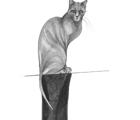 Realistic siamese cat by artist P Buckley Moss