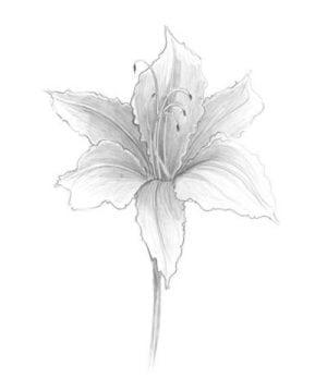 pbuckleymoss-limitededition-print-flower-floral-Lily