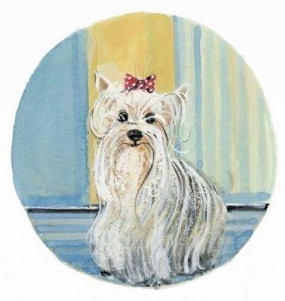 pbuckleymoss-print-limitededition-dog-yorkshire-terrior