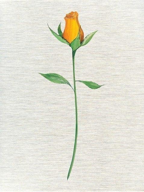 CanadaGooseGallery-Waynesville-Ohio-Art-Artist-PBuckleyMoss-CanadaGooseGallery-WaynesvilleOhio-LimitedEdition-Print-HomeDecor-Decorating-YellowRose-Optimistic-Flower-MetalPrinting
