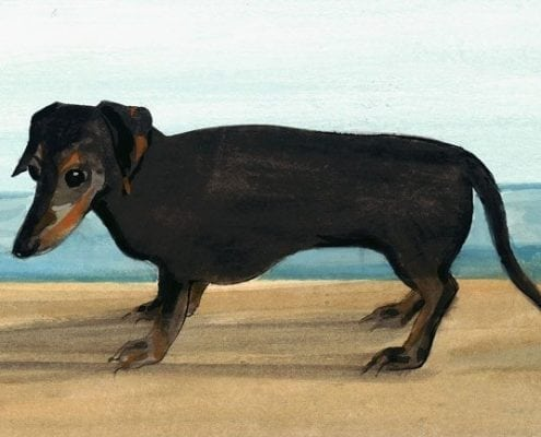 pbuckleymoss-print-limitededition-dog-dachshund