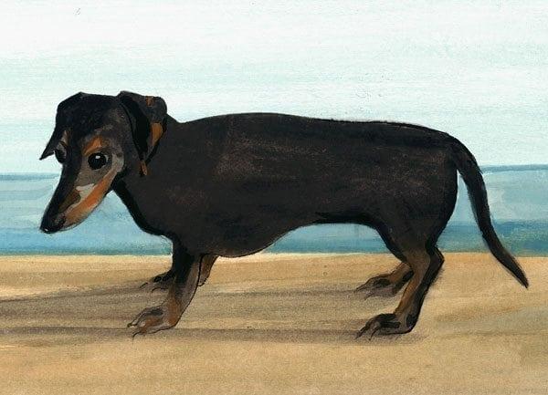 pbuckleymoss-print-limitededition-dog-dachshund