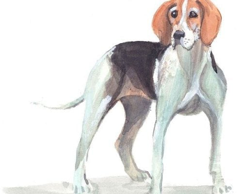 pbuckleymoss-print-limitededition-dog-hound