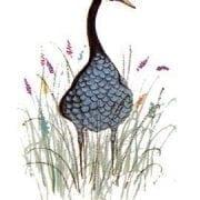 goose-blue-pbuckleymoss-limitededition-print