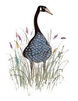goose-blue-pbuckleymoss-limitededition-print