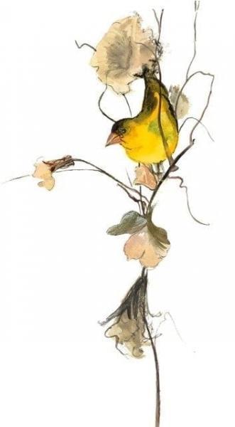 bird-limited-edition-print-pbuvkleymoss-art-artist-nature