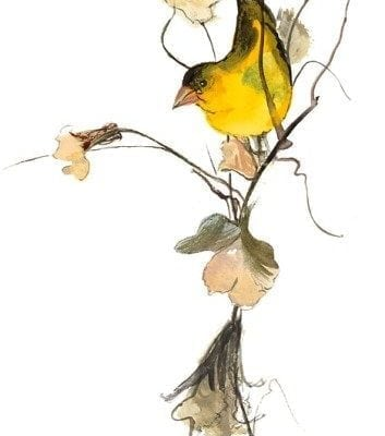 bird-limited-edition-print-pbuvkleymoss-art-artist-nature