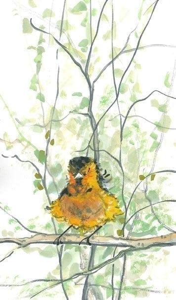 Bird-Nature-limitededition-print-pbuckleymoss-decor