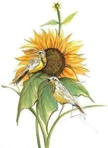 pbuckleymoss-limitededition-print-flower-floral-sunflower-bird