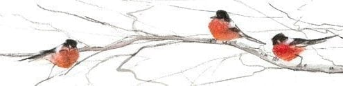 PBuckleyMoss-Waynesville-Ohio-CanadaGooseGallery-Art-Artist-LimitedEdition-Bird