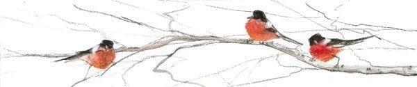 PBuckleyMoss-Waynesville-Ohio-CanadaGooseGallery-Art-Artist-LimitedEdition-Bird