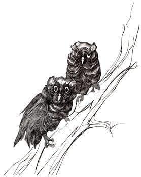 CanadaGooseGallery-WaynesvilleOhio-pbuckleymoss-etching-limitededition-owl