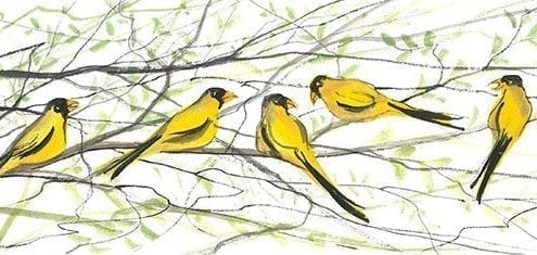 Bird-yellowbird-nature-interiordesign-pbuckleymoss-art-limitededition-prints-giclee