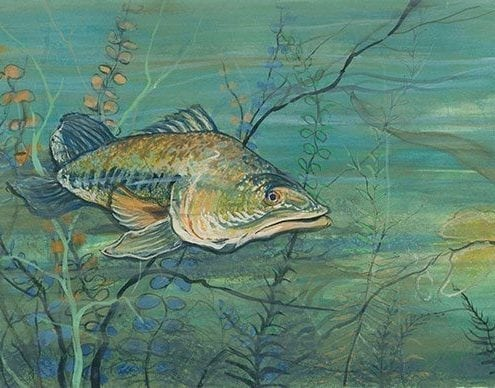 Lurking in the Depths limited edition print by P Buckley Moss features and underwater scene with large fish swimming though the sea. Colors are a combination of greens, aqua, blue, tans, splash of gold and earth tones.