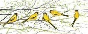 linited-edition-prints-pbuckleymoss-art-birds-birdsong