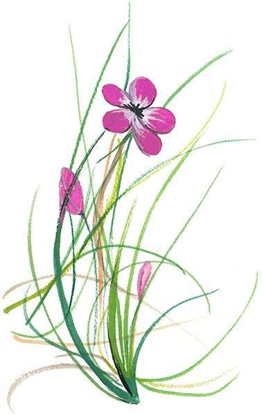 Spring-Flower-Flowers-PBuckleyMoss-Print-LimitedEdition-CanadaGooseGallery-WaynesvilleOhio